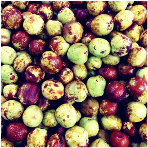 Jujube Be Black Window jujube information recipes and facts
