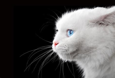 was tun wenn die katze in die wohnung pinkelt was kann tun wenn die katze nicht aufh 246 rt zu bei 223 en