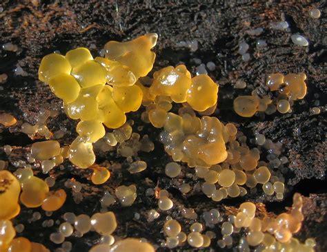 exle of fungi tangled web december 2013