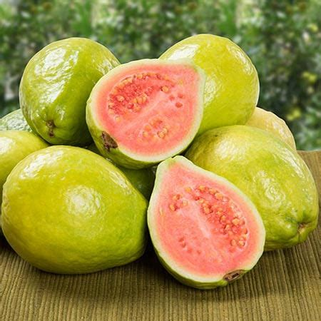 what color is guava ruby supreme guava tree for sale fast growing trees