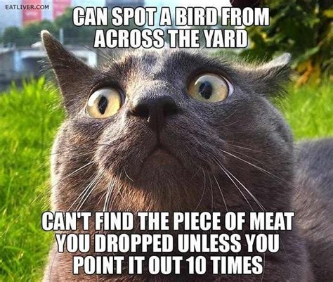 Thanksgiving Cat Meme - cat owners will understand 18 pics we rule the internet