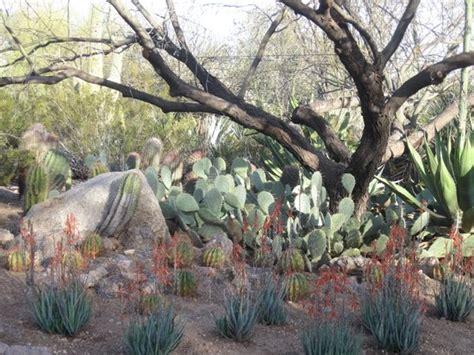 Desert Botanical Garden Hours by Gardens Picture Of Desert Botanical Garden