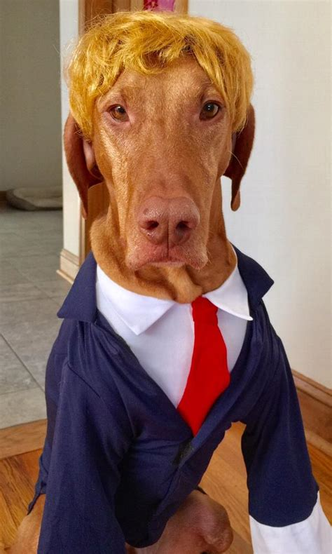 puppy in a suit business suit costume navy with same day shipping baxterboo