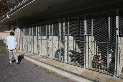 county shelter oc supes ripped again for bad treatment of animals for the curious