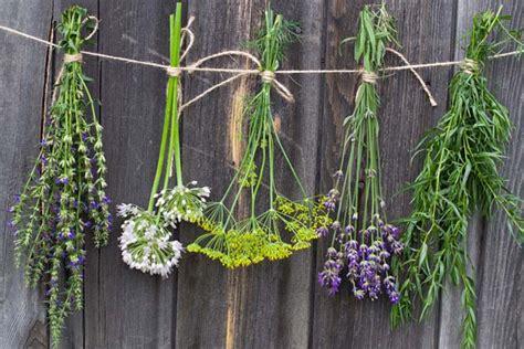hanging herbs how to grow herbs gardener s path