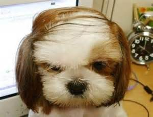 haircut ideas for hair dogs dogs with human hairstyles slapped ham