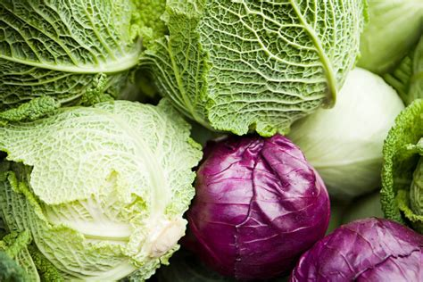 Cabbage varieties red vs purple cabbage