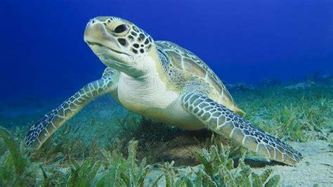lade per tartarughe d acqua tartaruga e testuggine vi spieghiamo la differenza