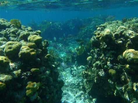 backyard aquarium photo gallery cayman del sol east end grand cayman s premier villa available for