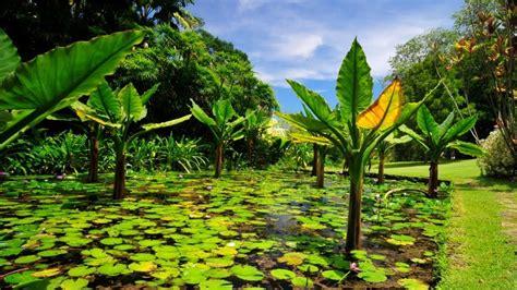 Seychelles National Botanical Gardens I Giardini Pi 249 Belli Mondo L Orto Botanico Nazionale