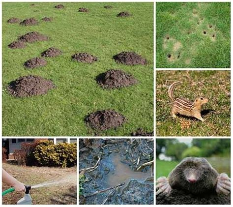 Will Landscape Fabric Keep Moles Out Best 20 Getting Rid Of Rats Ideas On Rat