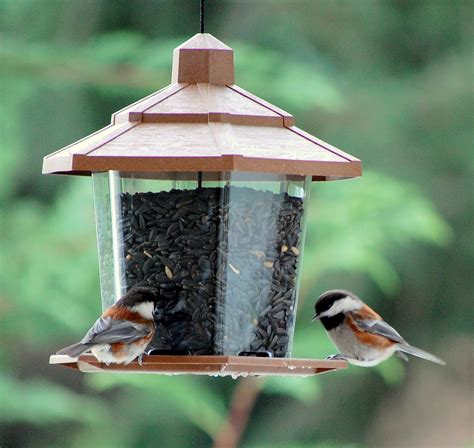 backyard bird baths and feeders keep them clean away