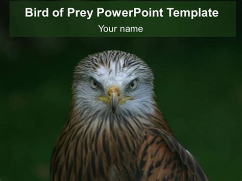 powerpoint themes free download birds bird of prey powerpoint template