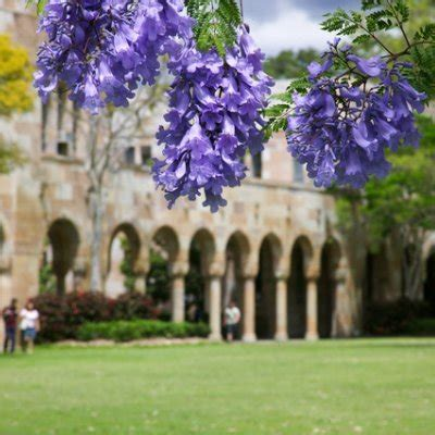 Uq Mba Review by Rankings Uq News The Of Queensland Australia