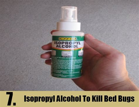 does isopropyl alcohol kill bed bugs bed bug eggs kill alcohol bangdodo