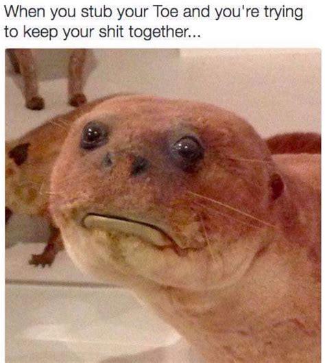 Welp Meme - welp meme by litfam io memedroid