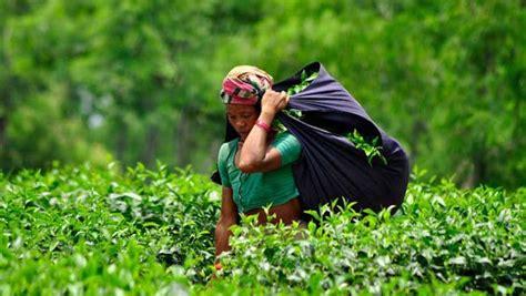 srimangal overnight  weekend  tea plantations