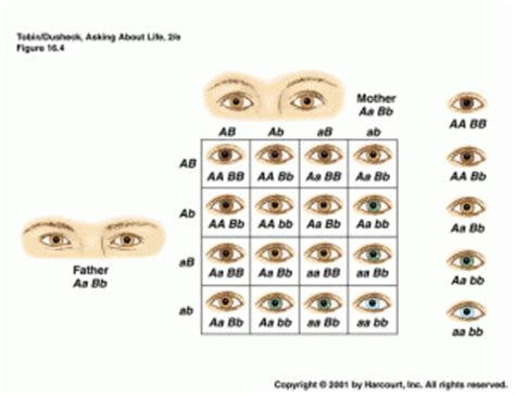 eye color pattern of inheritance what color are your eyes exactly