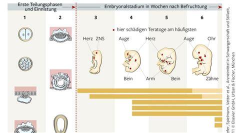 wann treten die ersten symptome einer schwangerschaft auf schwangerschaft die embryonale entwicklung bilder