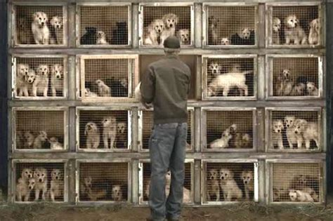 are puppy mills illegal ways on how to stop illegal puppy mills trackimo