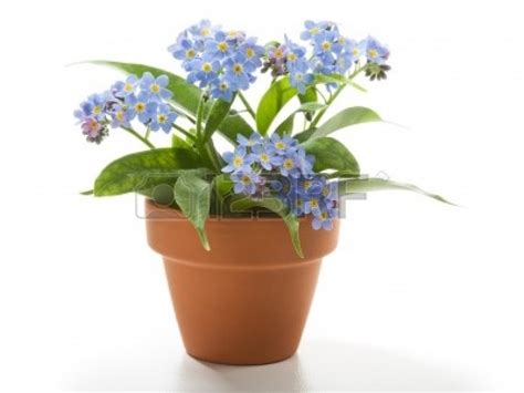 best flowers for small pots home ideas for gt flower pots with flowers i like this