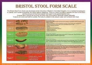 Stools digital art bristol stool form scale by galina imrie