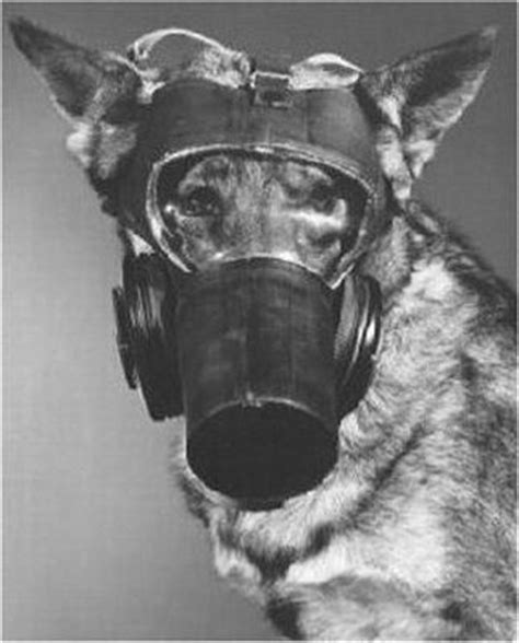 mask for dogs gas mask amusing masks dogs and gas masks