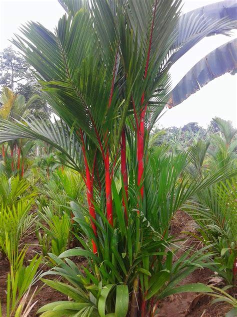 flora  fauna khas jambi creat future
