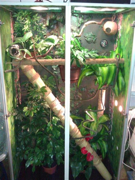 hilfe bei kronengecko terrarium terrarien weitere