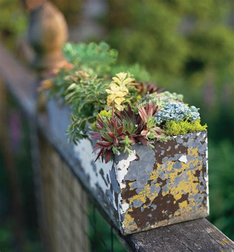 garden therapy hearty plants for the black of thumb popsugar home