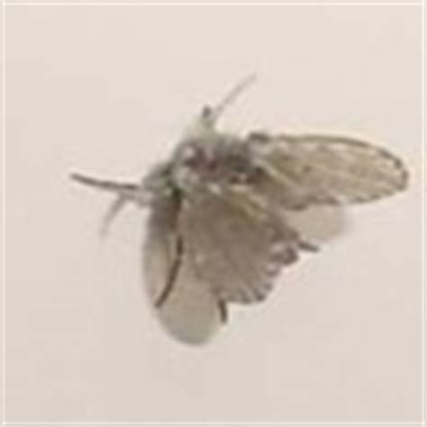 flies in the bathroom bathroom fly what s that bug