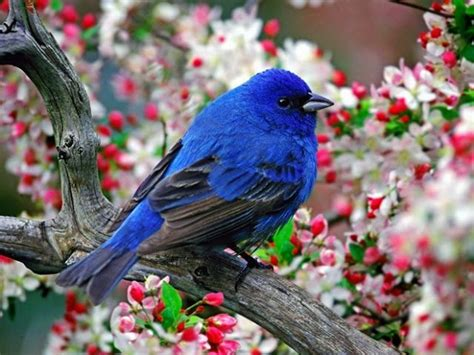 indigo blue bird color inspirations pinterest