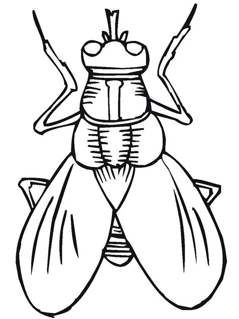free printable bug coloring pages kids