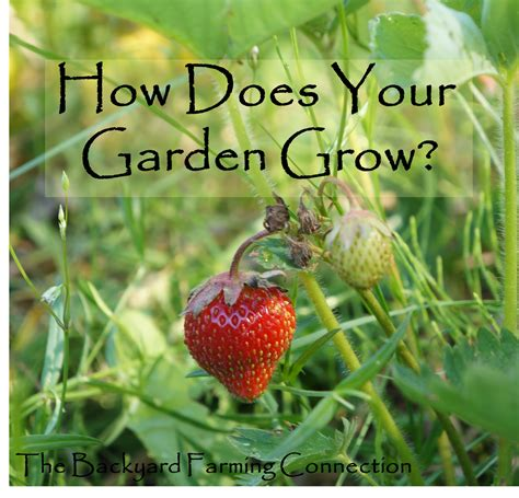 How Does Your Garden Grow by The Backyard Farming Connection How Does Your Garden Grow