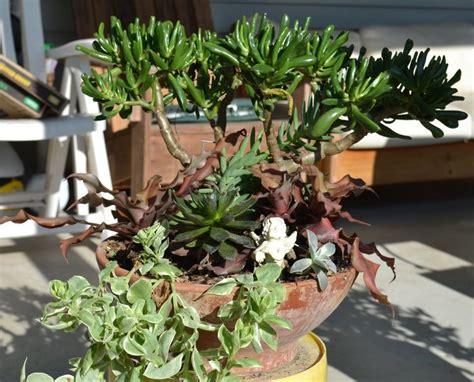 succulents florida garden pinterest