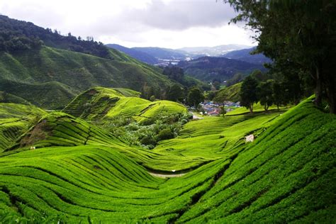 By Nature eco cameron highland tours inspired by nature