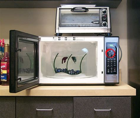 Microwave Office by Fish In Microwave Office Crap