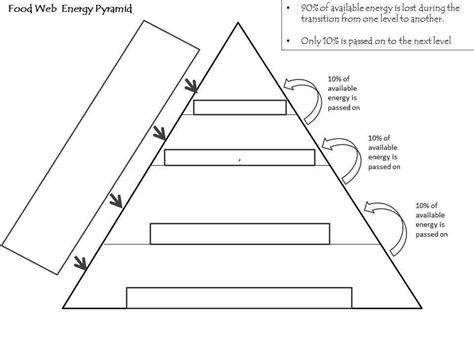 ecological pyramids worksheet homeschooldressage