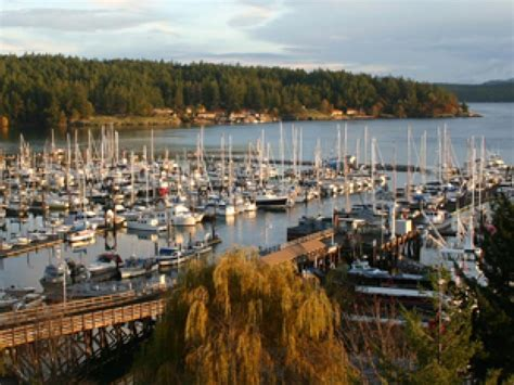 boat tours from seattle to san juan islands friday harbor orca whale watching san juan safaris san