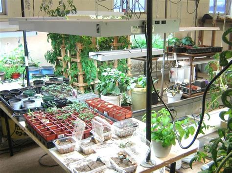 Basement Gardening Green Houses Pinterest Photos Starting Indoor Vegetable Garden
