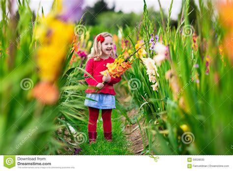 the flower childs play child picking fresh gladiolus flowers stock photo image 59528030