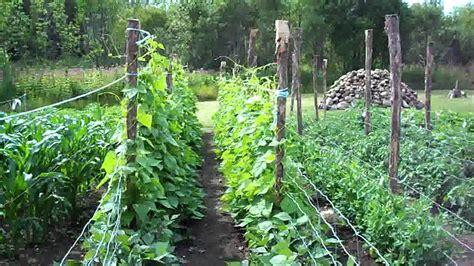 Some Very Serious Growth 7th Week 11 Heirloom Organic Heirloom Vegetable Gardening