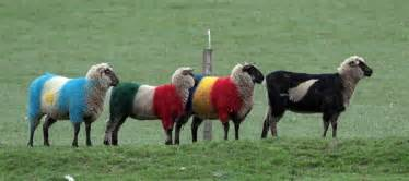 color sheep deltabluez stockdogs blue green and other colored