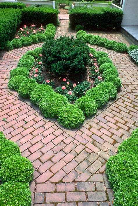 small garden with boxwood edging in city urban garden plant flower stock photography
