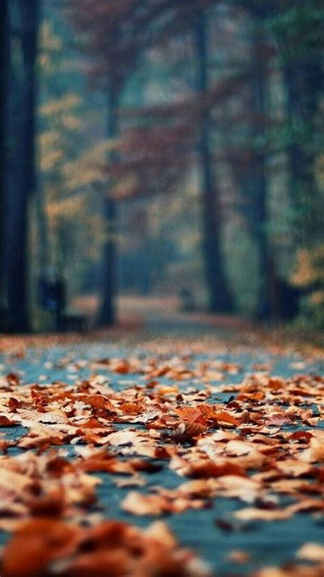 crispy autumn leaves pictures   images