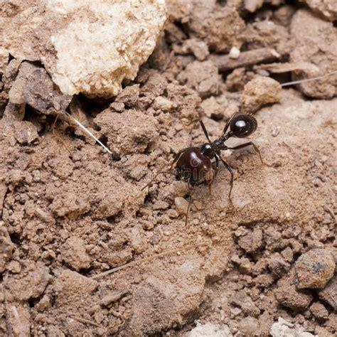 ants guarding nest stock photo image  colony nature