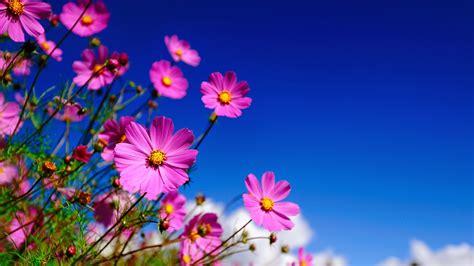 beautiful com beautiful flower wallpaper 07640 baltana