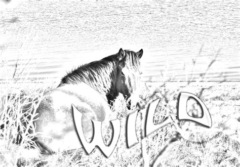 wild horses coloring pages to print wild horse coloring pages