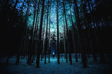 Free photo: Night, Forest, Trees, Moonlight   Free Image on Pixabay   1245875