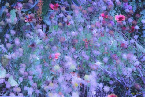 autumn flowers in blue photograph by angela a stanton